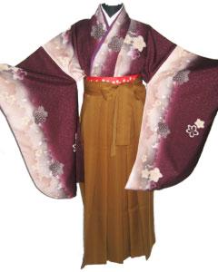 11.紫浪漫桜+茶京縞袴